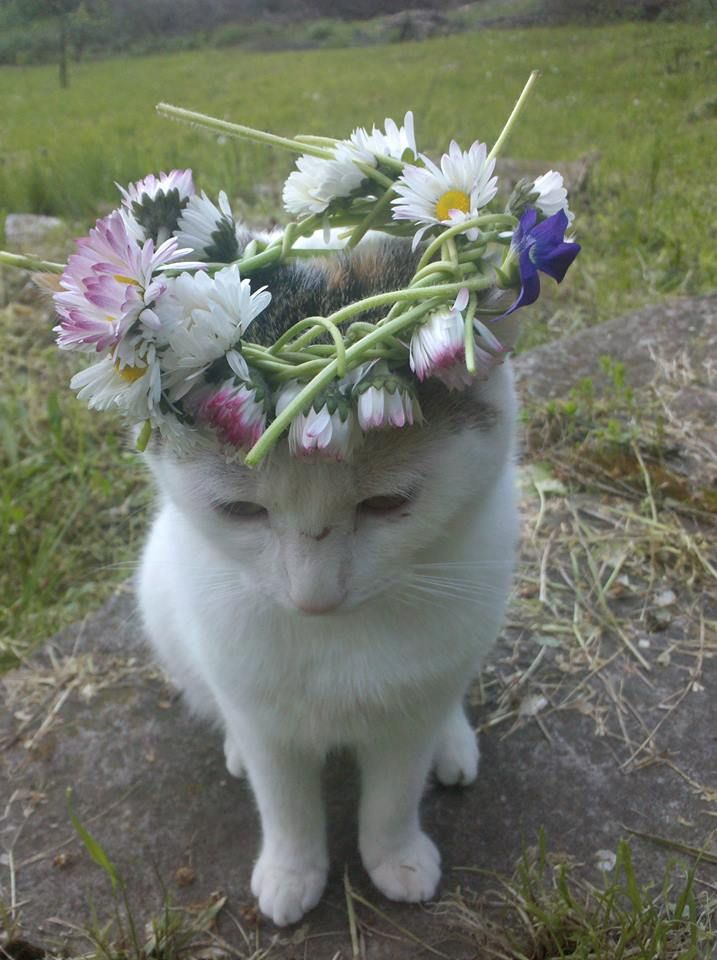 gypsi Cat