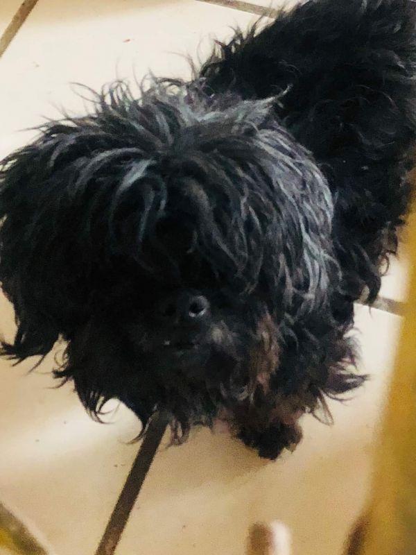 Dogs For Adoption Petfinder The Coolest Shih Tzu Dogs Kids