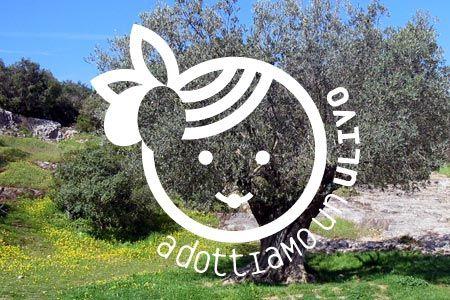 Adotta un ulivo è l'iniziativa di Antico Frantoio Muraglia per contribuire a valorizzare il paesaggio pugliese