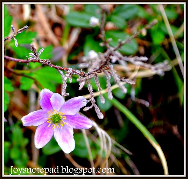 joy's notepad: The beauty in nature and in words!