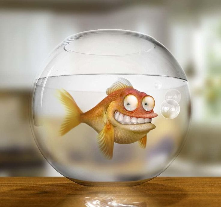 Рыба смешная картинки