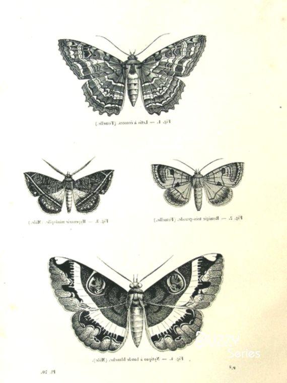 1860 Vintage Motten Gravur Antike Original Schmetterlinge Drucken Schmetterling Papi Vintage Tattoos Insekten Tattoo Natur Tattoos