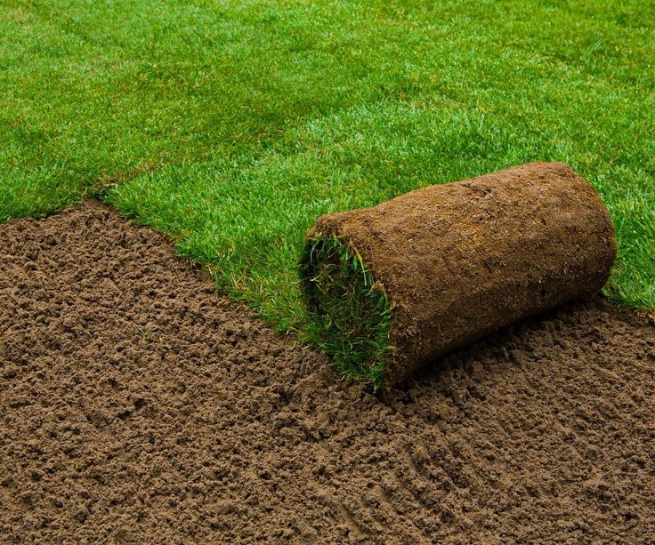 25 best ideas about lawn grass types on pinterest types of lawn grass types of grass and - Grass lawn types make the right choice ...