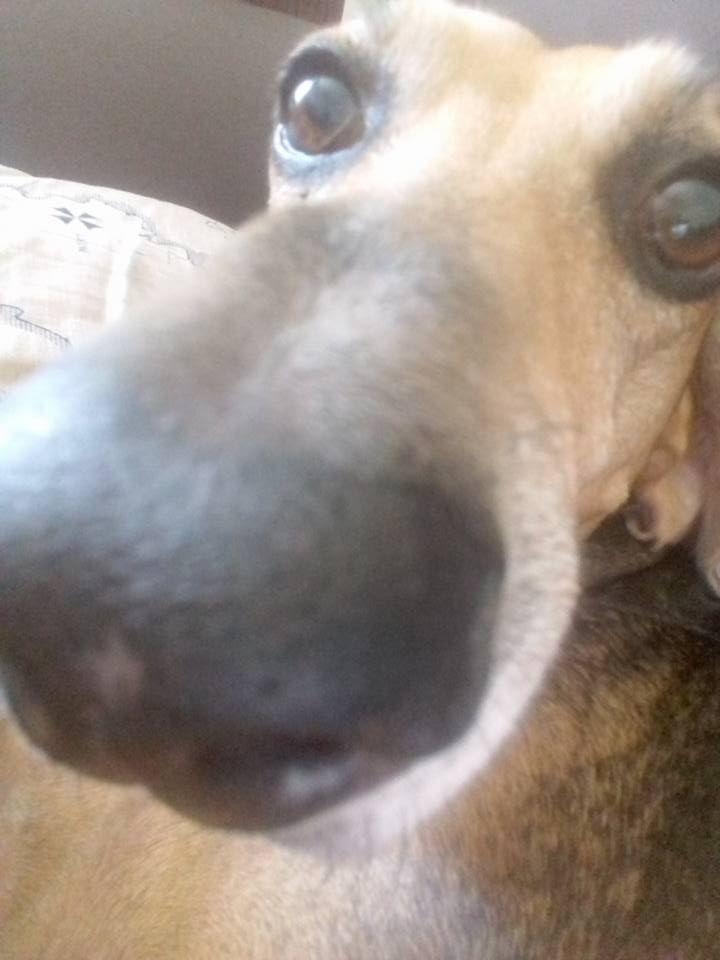 Il naso del cane si fa in 3D: la tecnologia sperimenta l'olfatto artificiale per la caccia agli esplosivi :http://www.qualazampa.news/2016/12/02/il-naso-del-cane-si-fa-in-3d-la-tecnologia-sperimenta-lolfatto-artificiale-per-la-caccia-agli-esplosivi/