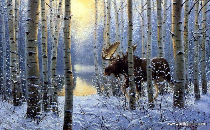Wildlife Artist Derk Hansen Unframed Moose Art Print On The Move   WildlifePrints.com