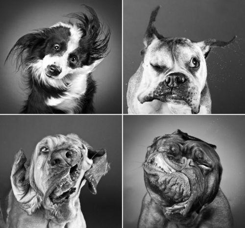 Perros en slow-motion | senderismo con mi perro