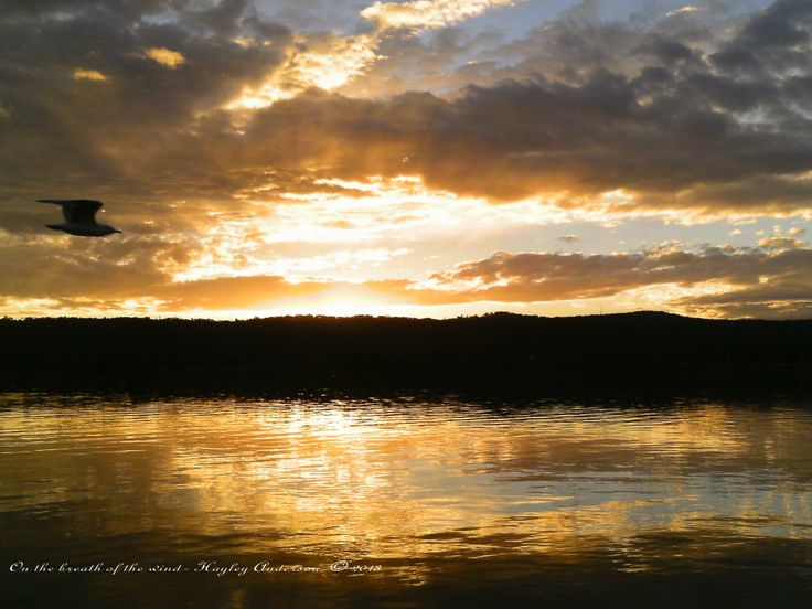 On the breath of the wind,  A beautifully glowing sunset at  Gosford Waterfront.   http://fineartamerica.com/featured/on-the-breath-of-the-wind-hayley-anderson.html
