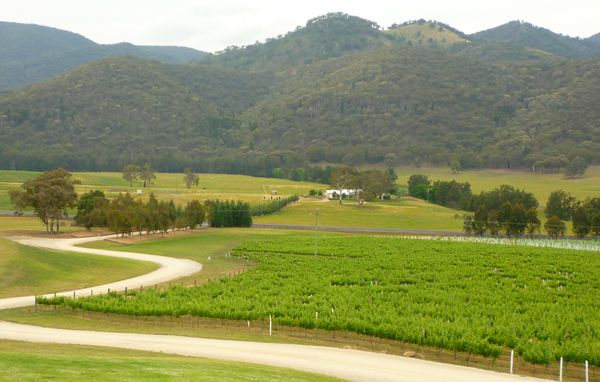 The view of the vineyards and hills from the deck at Logans WInes, Mudgee