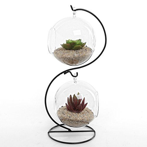 Modern S Curve Design Black Metal Display Stand with 2 Clear Glass Succulent Plant Terrarium Globes