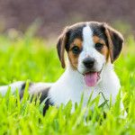 Great list of kid friendly dogs. Some you wouldn't even think were kid friendly.