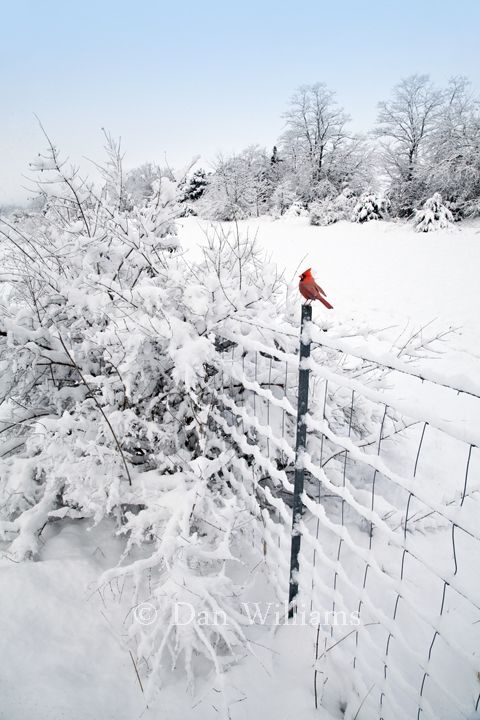 .~The Last Gifts of Winter - by Dan Williams - Bird Photography~. @adeleburgess