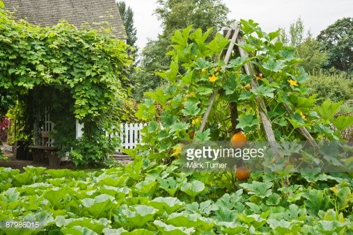 25 best ideas about Pumpkin vine
