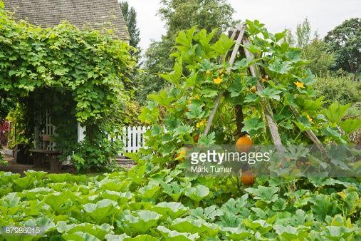 25 best ideas about Pumpkin vine