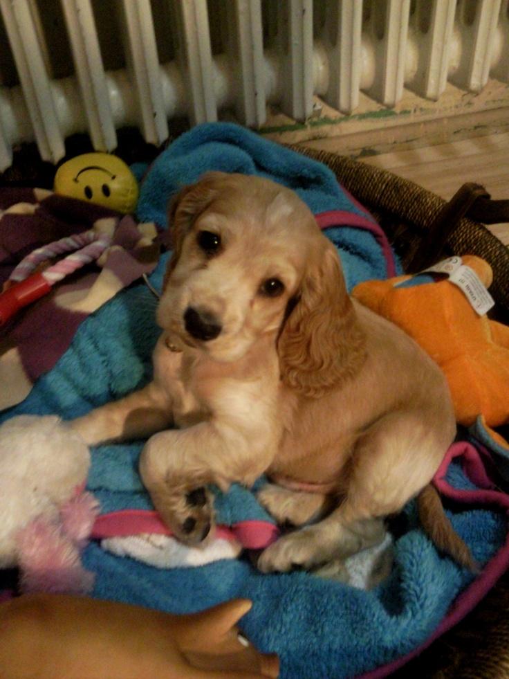 puppy Zobu :)