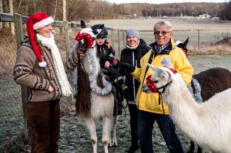 Allan Lindgren från Lions Club Jarramas njöt av att se hur glad Leo Andersson, 2,5 år, blev när han fick rida på en lama. Mamma Petra Andersson och lamaskötaren Christine Karlsson delar hans glädje.