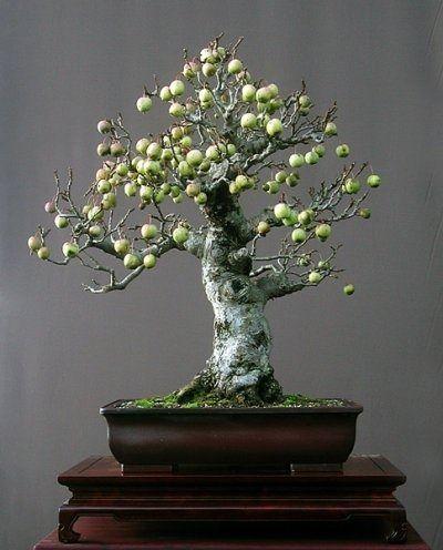 Um dos segredos dos bonsais: Nunca cultive um pé de jaca. Por mais que os esforços sejam em torno de miniaturizar plantas de porte gigantescos seus frutos sempre serão de tamanho natural.