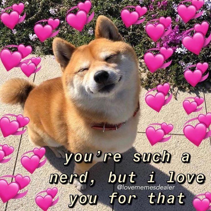 Shiba Inu Are Cute Cute Memes Love You Meme Cute Love Memes