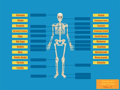 de 25+ bedste idéer inden for skeletal system activities på, Skeleton
