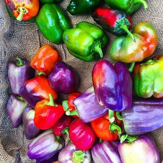 Have you ever had a purple bell pepper? :) Spotted these at the farmer's market, and because purple is my favorite color and all, had to share!