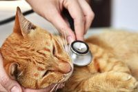 How to Use Coconut Oil for Fleas, Sores and Coat Problems on Your Pet | eHow