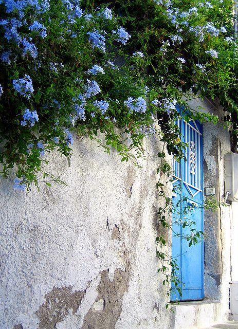 Garden door the same color as the plumbago that grows next to it...