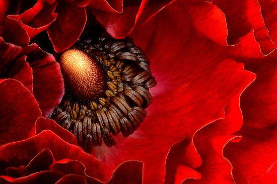 Red by Linde Stewart