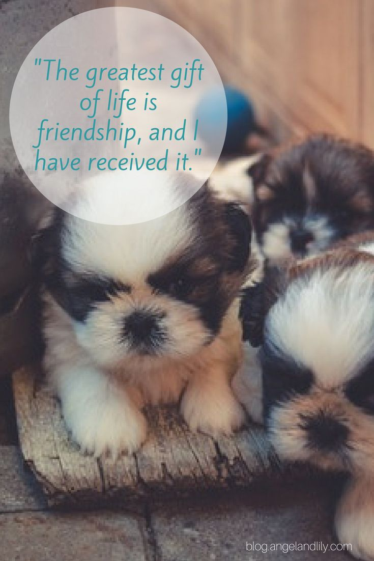 Quotes About Dogs And Friendship 69 Best Inspirational Quotes Images On Pinterest  A Quotes
