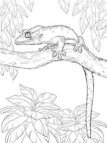 Ресничный геккон-бананоед на дереве Раскраска