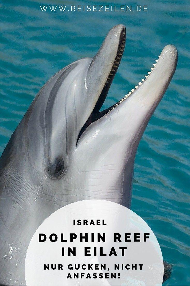 Wer mit Delphinen schwimmen will, sollte das an einem Platz tun, wo man respektvoll und auf einer echten Vertrauensbasis mit den Tieren umgeht und die Eingriffe in ihre natürliche Lebensweise so gering wie möglich bleiben. Beim Dolphin Reef in Eilat hatte ich das Gefühl, dass es funktioniert.