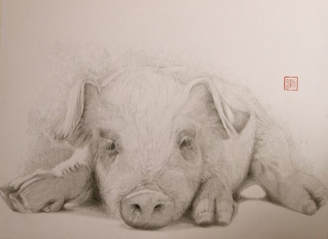 Drawing of a pigPigs Fly, Painting Art, Art Crafts House Ideas, Google Search, Pigs Pencil, Pigs Great Work, Islands Art, Pencil Drawings, Pigs Iii
