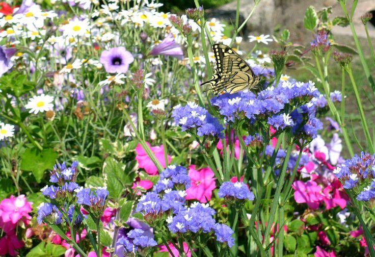 una-farfalla-sui-fiori