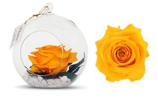 Rosas Preservadas - Montsé Gifts