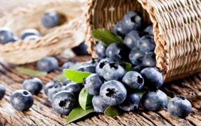 Khasiat dan Manfaat Blueberry Bagi Kesehatan