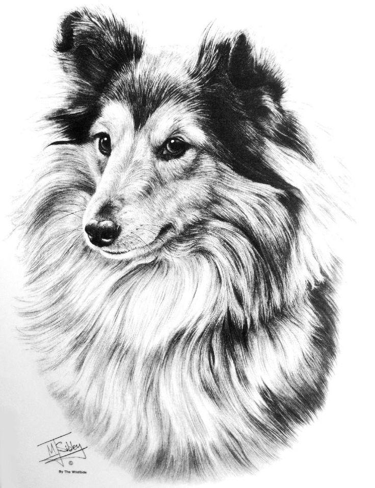 SHETLAND SHEEPDOG / SHELTIE Dog Design by Mike Sibley ...