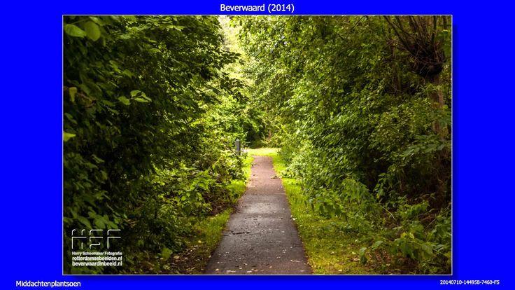 2014 07 10 Beverwaard  De wandeling van 10 juli 2014 in Beverwaard, met o.a. beelden van het Middachtenplantsoen en de Buurttuin Beverwaard  #Beverwaard #Rotterdam #Middachtenplantsoen #BuurttuinBeverwaard  https://youtu.be/kftkJX_Yfo8