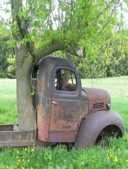 Old Farm Truck With Tree Growing Up Through Bed Of It
