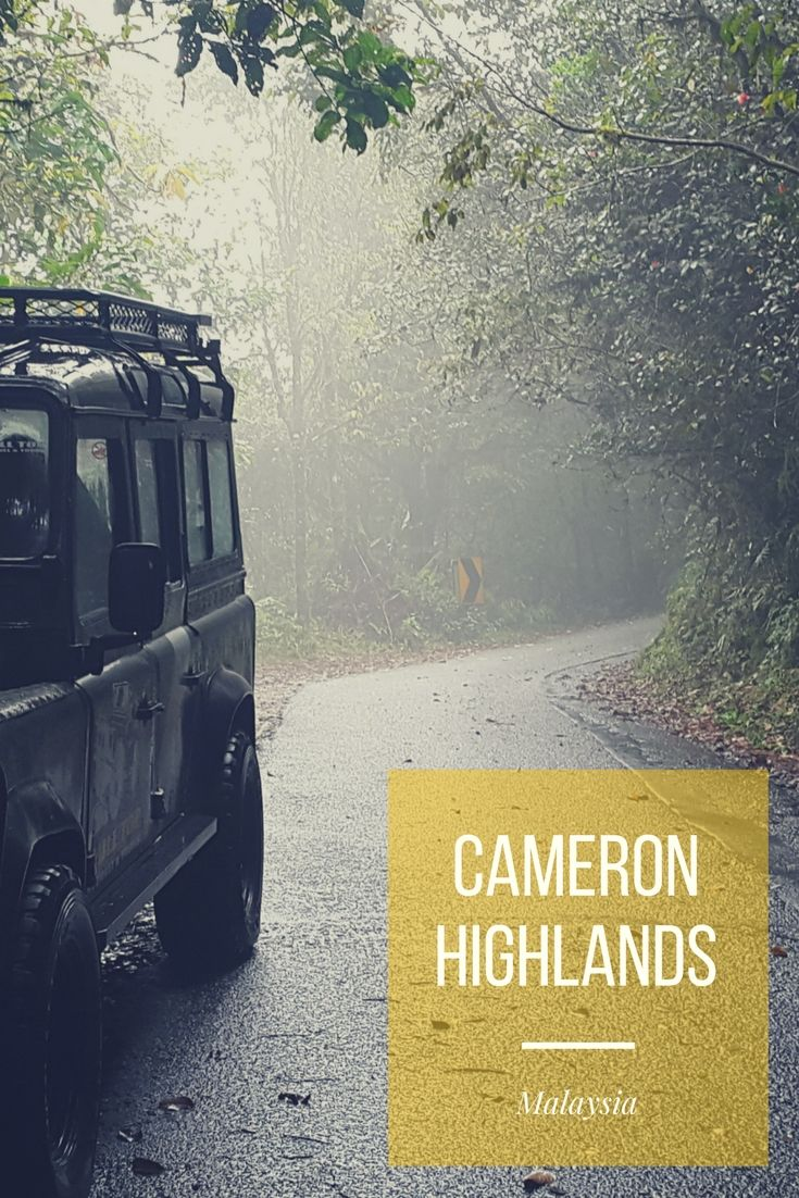 Cameron Highlands – Tee, Erdbeeren und Wanderwege mitten in der Nebeldecke http://www.travelcurly.com/cameron-highlands/