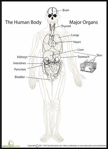 17 best ideas about body diagram on pinterest | anatomy, anatomy, Muscles