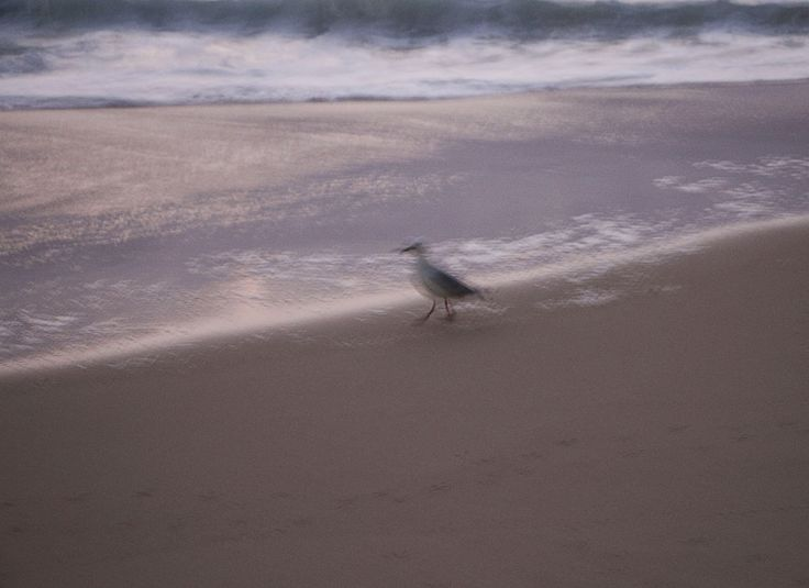 Impressionist photography Seagull