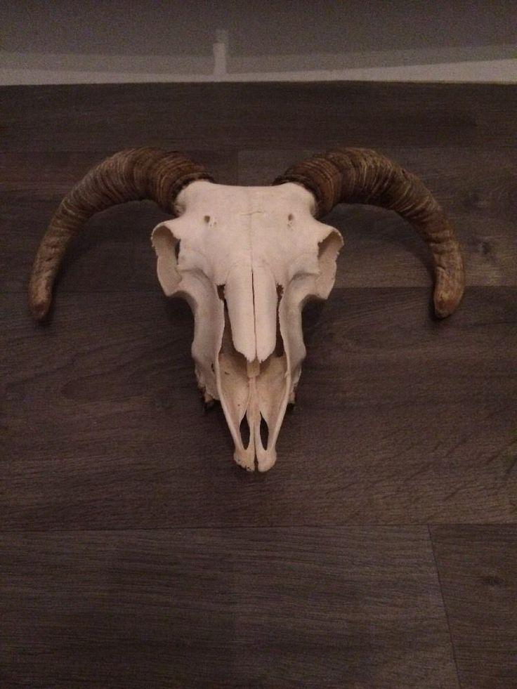 Park Art|My WordPress Blog_Animal Skull With Horns Pictures