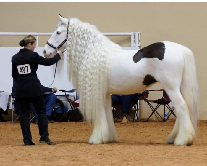 Top 20 Most Beautiful Horses In The World  Pouted Online Magazine  Latest Design Trends Creative Decorating Ideas Stylish Interior Designs  Gift Ideas