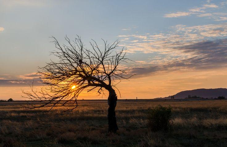 Róth Hajnalka Magányosan Csákberény határában a magányosan álló kiszáradt fánál, egy októberi naplemente. Több kép Hajnalkától:  https://www.facebook.com/nalkaroth/