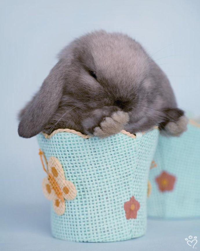 Nutmeg – Daily Pet Calendar for April 26, 2013 – Rachael Hale ® The world's most lovable animals