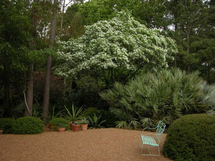 You love your new home but question whether the builder has planted the right tree in the right spot. Chinese fringe tree