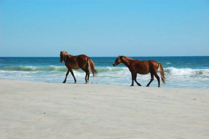 10 Little Known Beaches In North Carolina That Will Make Your Summer Unforgettable 6. Corolla Beach