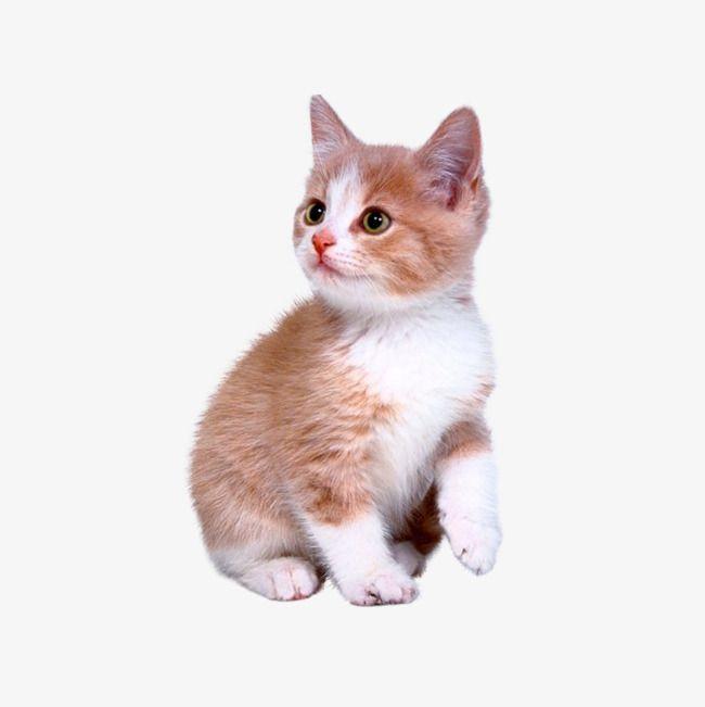 Cute Kitten Kittens Cutest Cats Cute Animals