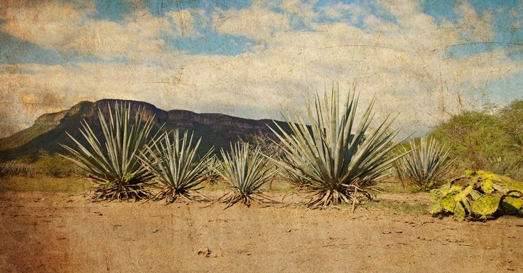 The Differences Between Tequila and Mezcal, Explained