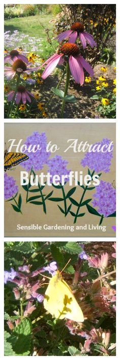 How to Attract Butterflies with Sensinle Gardening