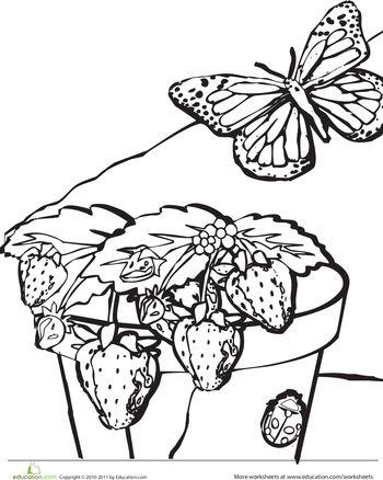 105 best images about seal kindergarten plants on pinterest when