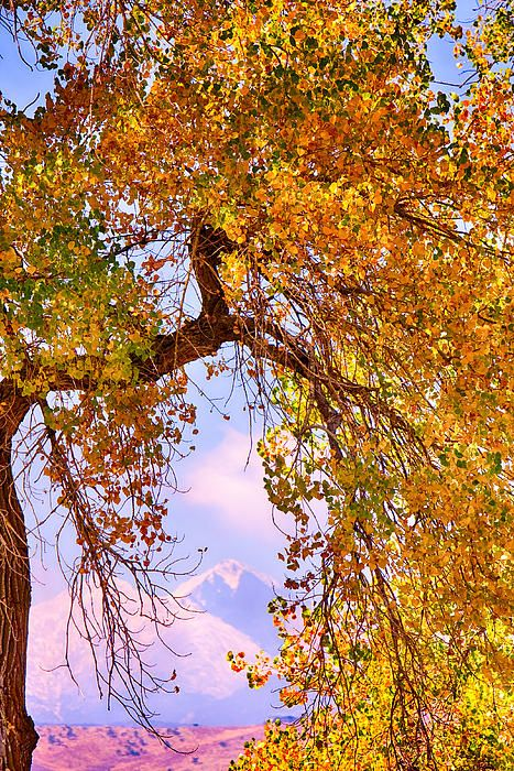 17 best cottonwood trees images on pinterest stems carving and twin peaks longs peak and mt meeker colorful autumn view colorado giant autumn fandeluxe Choice Image
